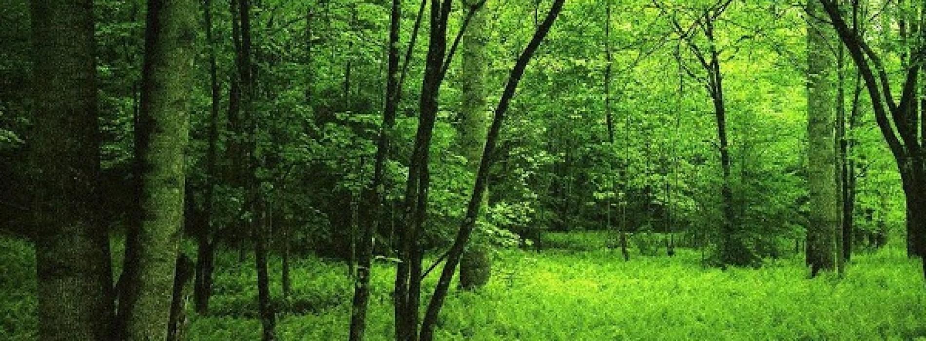 Ulgi na podatek leśny