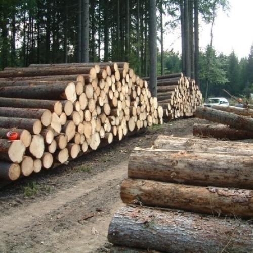 Jak wysoki jest podatek leśny?