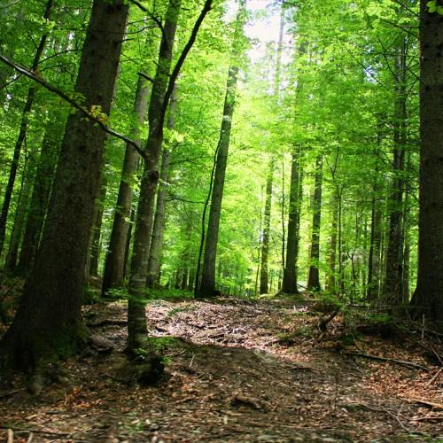 Na jakie dotacje unijne przy zalesieniu można liczyć w ramach nowego Programu Rozwoju Obszarów Wiejskich 2014 – 2020