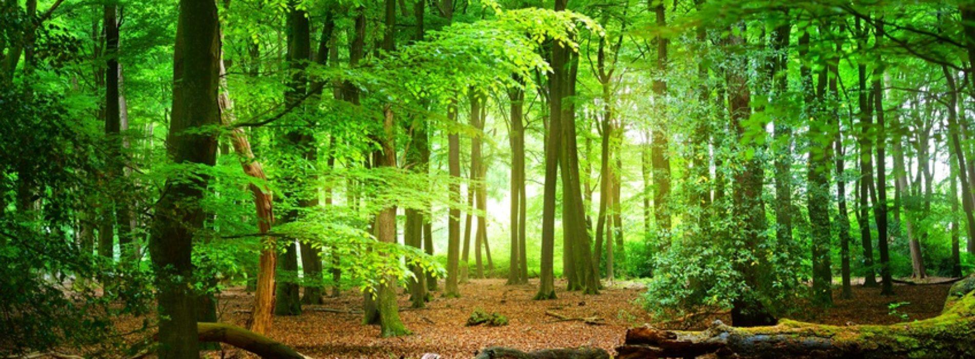 Żyj w zgodzie z naturą. Jak chronić lasy?