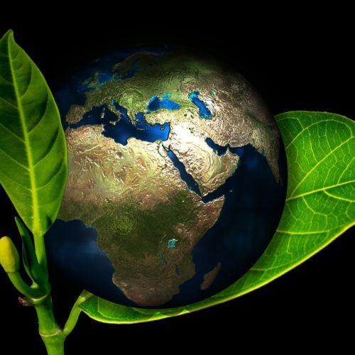 Firmy coraz mocniej stawiają na ekologię