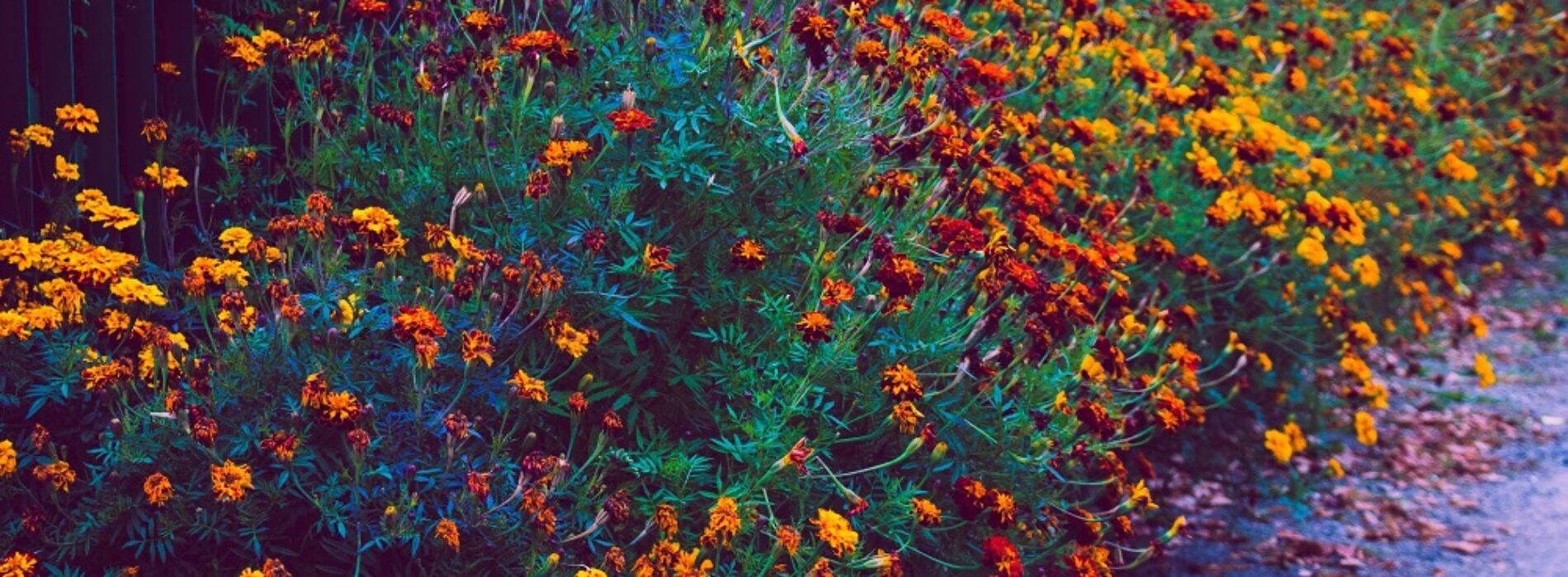 12 najpiękniejszych krzewów i kwiatów do ogrodu – inspiracje